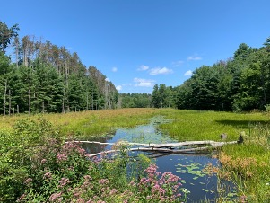 Landscape photo of a wetland with flowers on a sunny day